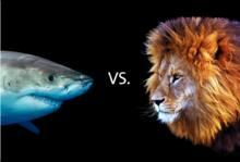 Black background with shark and lion staring at each other with the letters VS in between