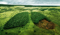 Birds eye view of large field of green. at the center is lung shaped made half of a forest the other half of deforestation