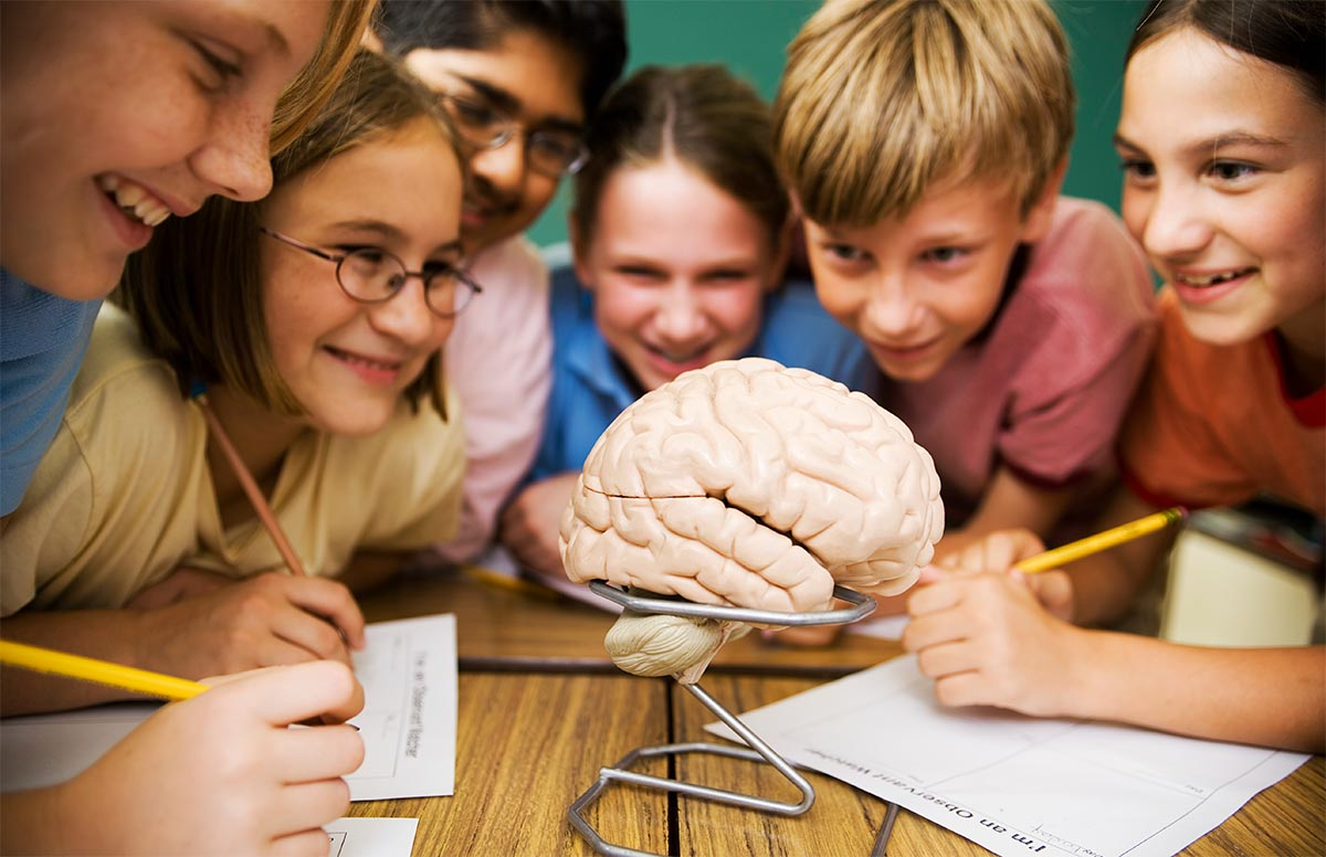A group of children looking at a model of a human brain