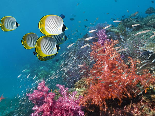 several groups of fish underwater, among colorful flora