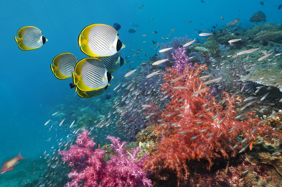 The diversity of fishes for Fish fish fish fish fish