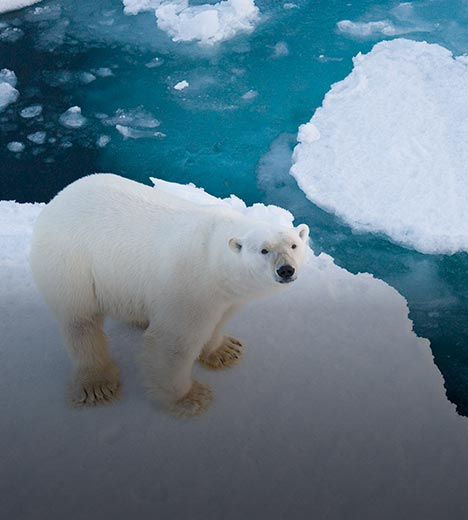 a polar bear standing on floating ice, with smaller chunks of ice surrounding it