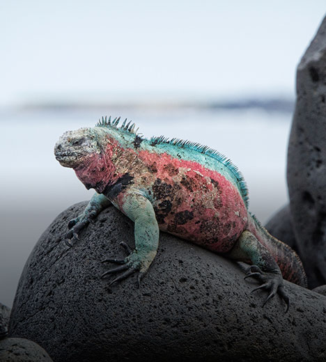 a colorful lizard sitting on top of some large stones