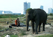 a solution to the endangerment of the asian elephant