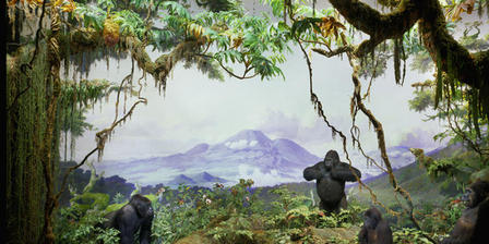 Mountain Gorilla Diorama in the Akeley Hall of African Mammals