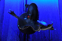 18. Vampire squid_DF.3759.jpg