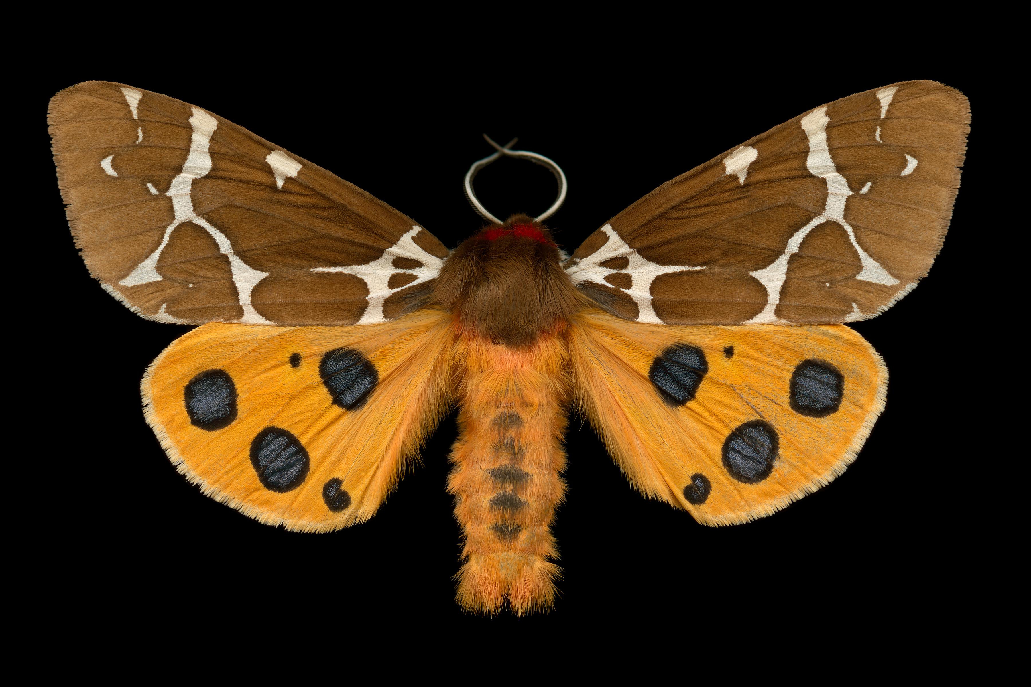 Happy National Moth Week!