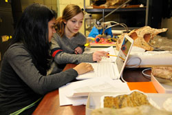SRMP students Anika Rastgir and Caitlin King study ceratopsian skull shapes with a Museum scientist. © AMNH/D. Finnin
