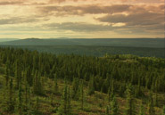 The boreal forest biome, also known as taiga, encircles Earth at northern latitudes.AMNH