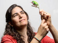 CBC Director Dr. Ana Luz Porzecanski with a model of a Cuban tody