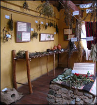 An exhibit along the Bolivian Andes highlighting plants in the region that are used for medicinal purposes. Felicity Arengo
