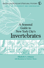 A Seasonal Guide to New York City's Invertebrates