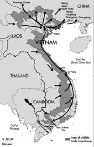 "The flow of wildlife trade through Vietnam (after Compton and Le Hai Quang 1998, in Sterling et al. 2006 ""Vietnam: A Natural History"")"