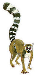 What-you-can-do-lemur