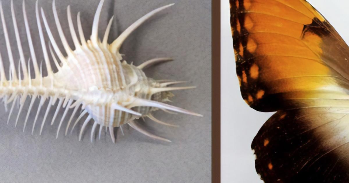 invertebrate zoology amnh