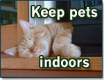 Keep-pets-indoors