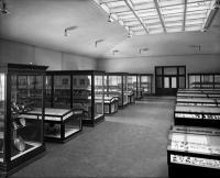 Table cases and arrangement of specimens on sloping shelves, Shell Hall. (AMNH image no. 378)