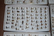 Entomology Specimens 2