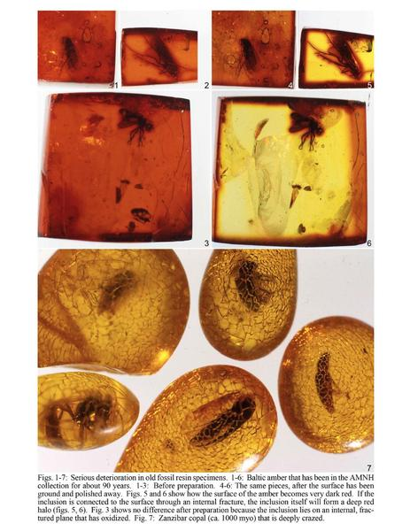 Amber specimens that have darkened or crazed as a result of light exposure and other environmental damages.