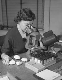Archival image of micropaleontologist Angelina Messina using a microscope, with specimen jars in front of her and some specimens laid out on the table.