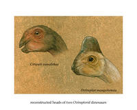 Hand-drawn color illustrations of the heads of two Oviraptorid dinosaurs.