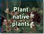 Plant-native-plants
