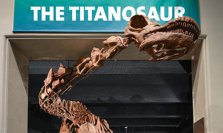 Head and neck of the titanosaur dinosaur model reaches out of the entrance to the room where it is displayed.