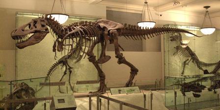 Natural History Museum New York Curator