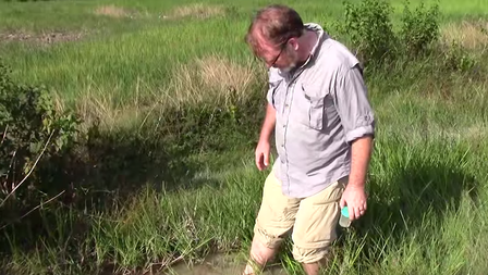 Mark Siddall wades in water to collect leeches.