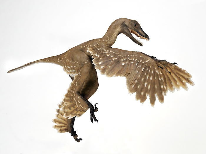 the purpose of feathers in non avian dinosaurs Did all dinosaurs have feathers  suggest that avian scales are aborted feathers, an idea that explains why birds have scaly legs  the discovery repeatedly .