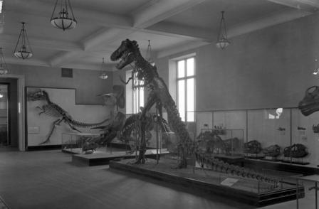 T. rex skeleton displayed standing upright
