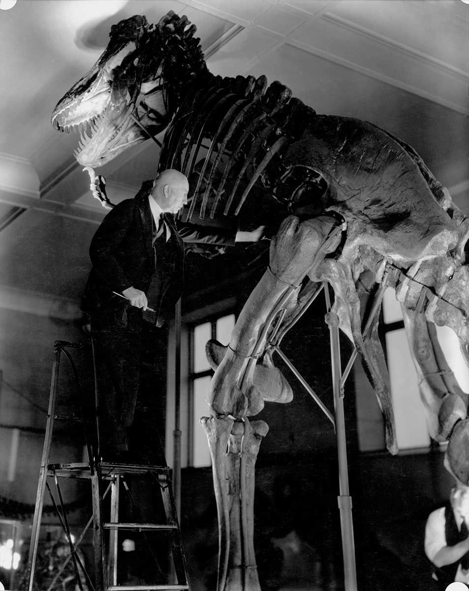 Barnum Brown Posing with the T. rex skeleton in the halls of the American Museum of Natural History.