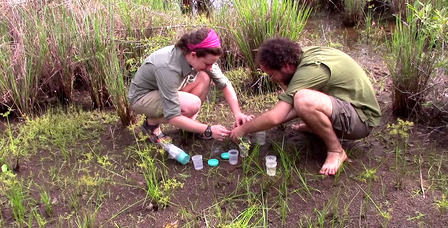 Two researchers crouch on the ground while collecting leeches in Cambodian forest.