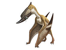What Is A Pterosaur? Thumbnail