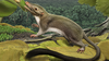 Researchers Reconstruct the Common Ancestor of Placental Mammals thumbnail