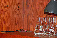 Photo of four glass beakers on a shelf beneath a task lamp with Vernier light sensor in a fixed position at left