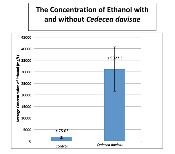 essays cellulosic ethanol