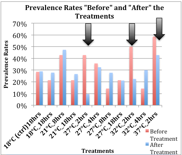Figure 6: Shows the before and after QPX prevalence rates of the clams in each treatment.