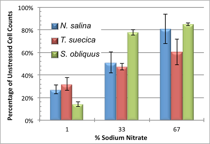 Figure 4: Cell counts of cultures grown during nitrogen limitation experimentation. The bars represent the average cell counts of each treatment normalized to unstressed (100% sodium nitrate) cultures. Growth is shown to decrease with increasing degrees of stress. All cultures had some degree of growth despite stress, as they were initially inoculated at 15 cells/µl. After 14 days of nitrate limitation at 33%, N. salina cultures had approximately half the cellular density of nitrogen-replete cultures. Scenedesmus saw the greatest growth and was least inhibited by nitrogen stress, with nitrate limitation only slightly affecting cell populations at 33% and 67%. T. suecica and N. salina had comparable cell counts at each stress level.*In all figures, error bars represent one standard deviation.