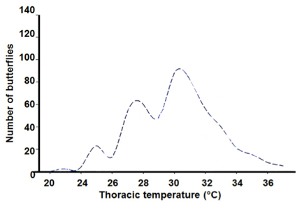Thoracic temp vs. abundancec