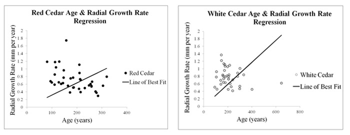 Figure 14 (left): Eastern red Cedar (Juniperus virginiana) age and radial growth rate regression chart. Figure 15 (right): Northern white cedar (Thuja occidentalis) age and radial growth rate regression chart.