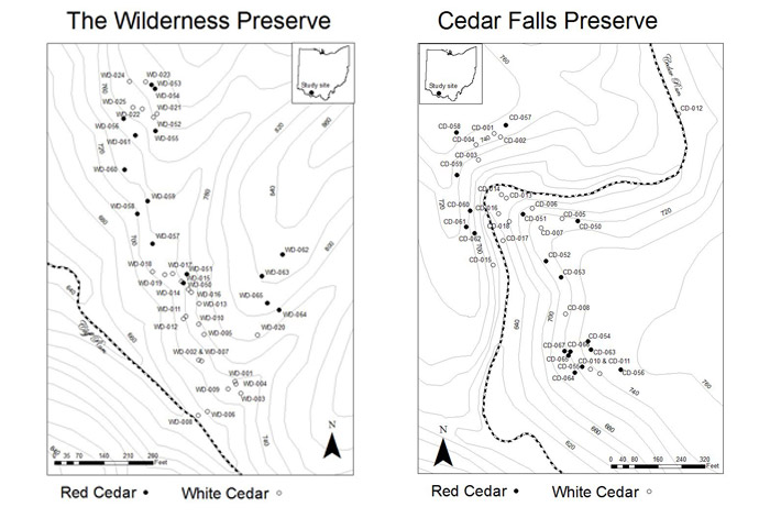 Figure 5 (left): Cedar Falls Preserve, Adams County, Ohio site map illustrating northern white cedar (Thuja occidentalis) and eastern red cedar (Juniperus virginiana) sample proximity.Figure 6 (right): The Wilderness Preserve, Adams County, Ohio site map illustrating northern white cedar (Thuja occidentalis) and eastern red cedar (Juniperus virginiana) sample proximity.
