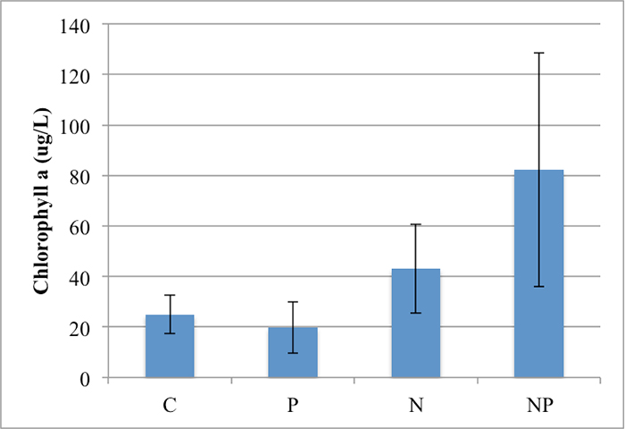 Bar graph showing chlorophyll a concentrations for control (second-lowest), phosphorus (lowest), nitrogen (second-highest), and nitrogen/phosphorus (highest).