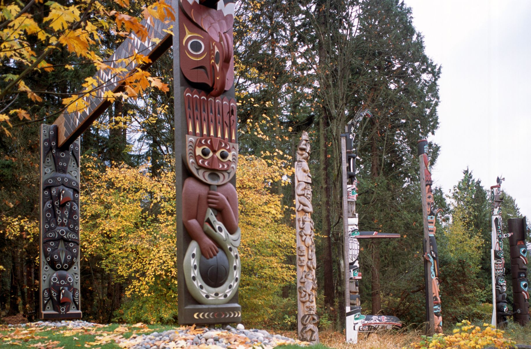 Tall totem poles line the edge of a forest.