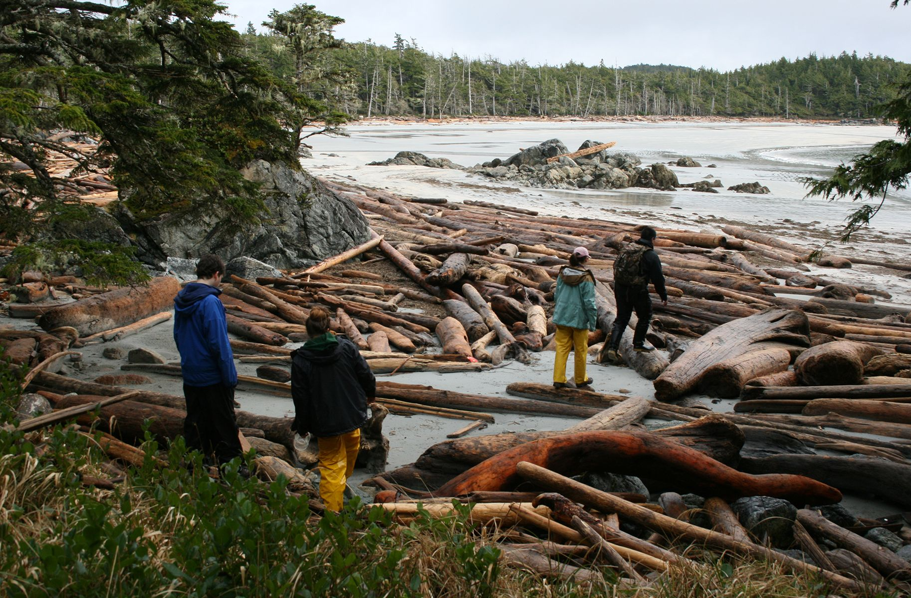 Four students  walk across large piles of driftwood that cover the beach.