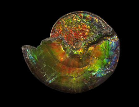 Ep 6 Iridescent Ammonite
