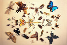 invertebrate_zoology_insect_samples