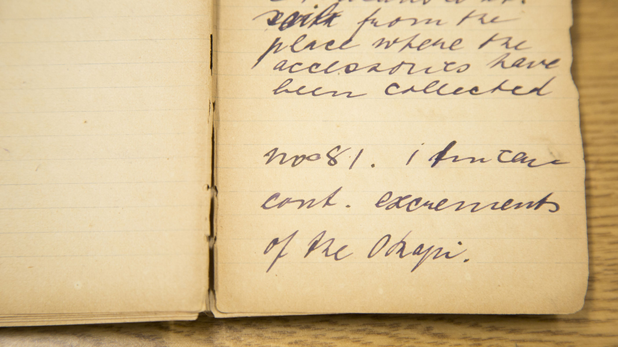 "A field notebook, yellowed with age, displays handwritten text reading ""one tin can of Okapi excrement""."
