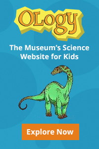 The welcome tab to Ology, the Museum's science website for kids. Cartoon drawing of green long-necked dinosaur.