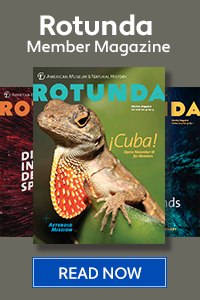 "Fall 2016 cover of Rotunda Member Magazine featuring a Cuban anole, two other Rotunda issues behind it, and a ""Read Now"" button below it."